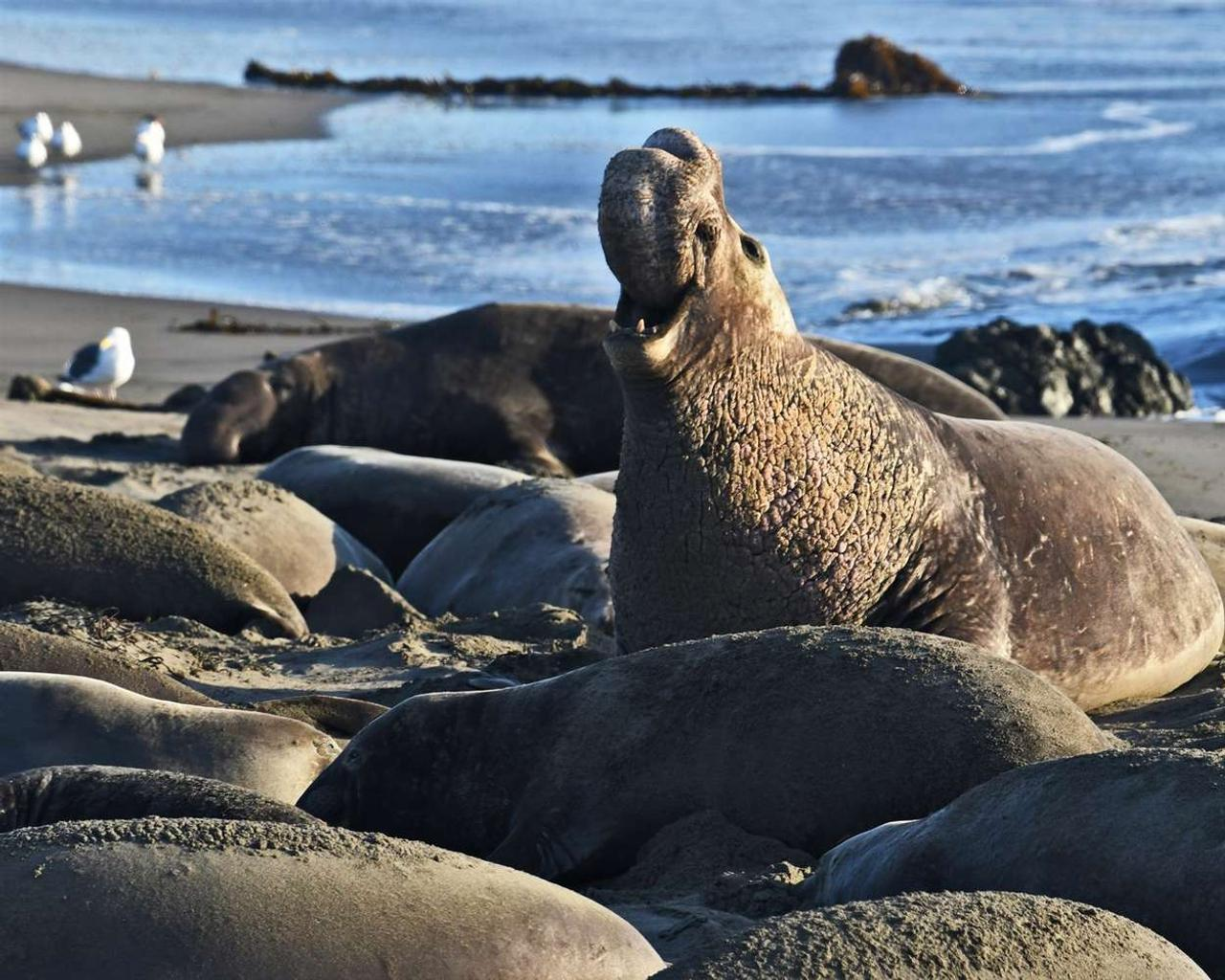 Man who shot, killed elephant seal in California sentenced to prison